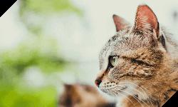 動物ボランティア団体としての活動