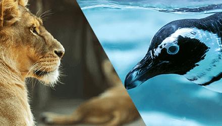 動物園・水族館との連携
