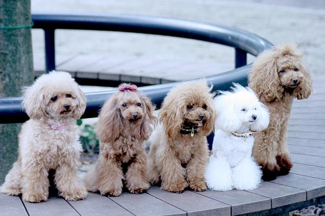 公園のベンチに座る犬たち