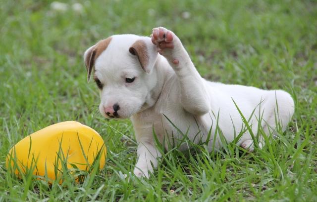 ボールと遊ぶ犬
