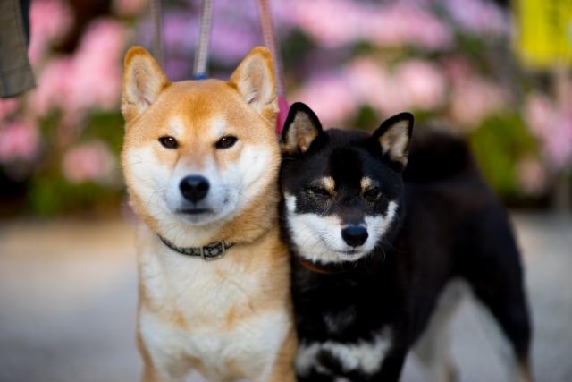 犬の火葬におけるチェックポイント