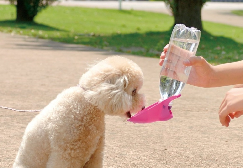 散歩途中で水を飲む犬