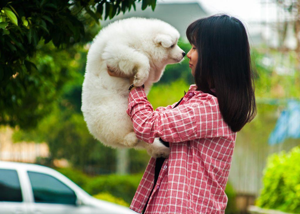 飼い主に抱き上げられる犬