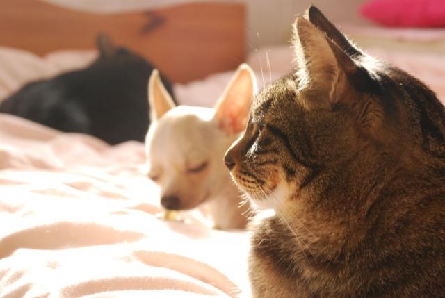犬 猫 霊園