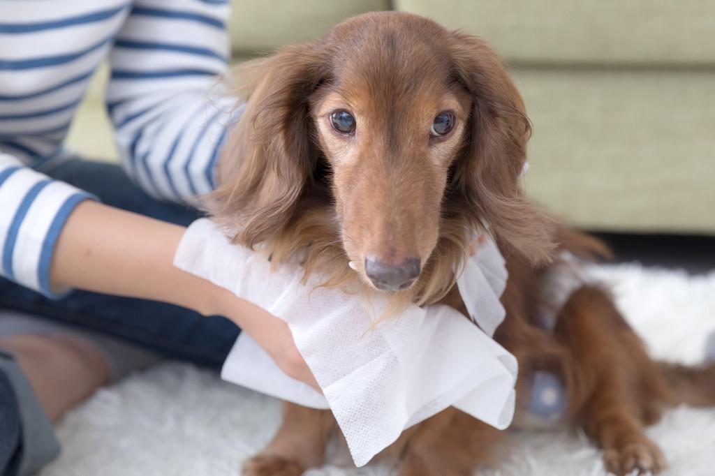 老犬が起き上がれない原因と飼い主がとるべき対処について