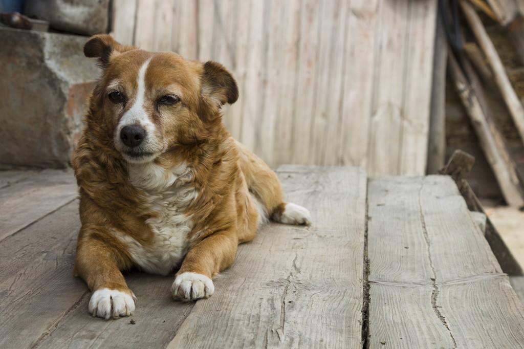 老犬の認知症末期ではどのような症状があらわれる?